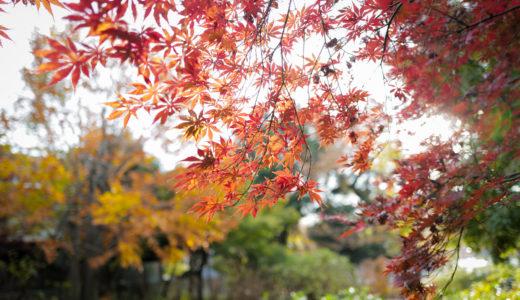 【WalkWithLeica #4】赤と黄色が色づく洗足池公園で秋を感じる。